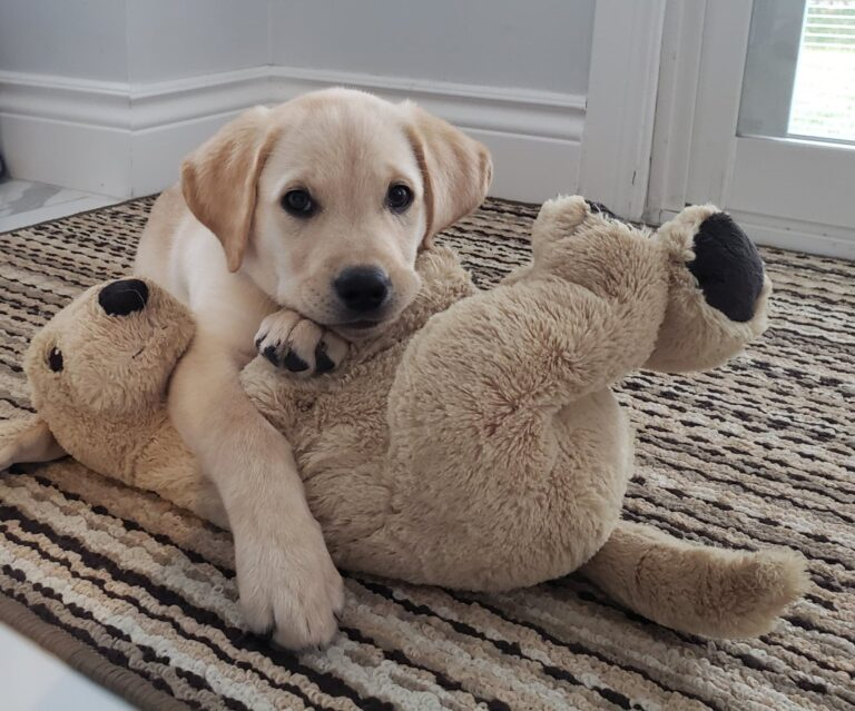 Puppy Parenting: The Joys and the Sorrows